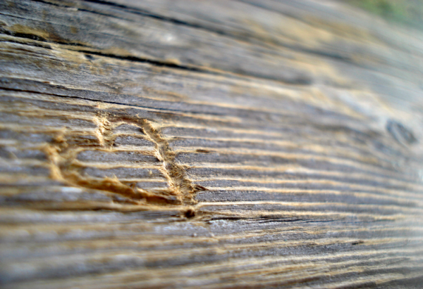 heart in wood Sara Alfred